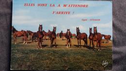 CPSM CHEVAL CHEVAUX EN CAMARGUE ELLES SONT LA A M ATTENDRE J ARRIVE SIGNE L ETALON ED ELCE - Chevaux