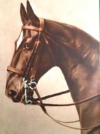 Cpa  CHEVAUX . Belle Tête De  CHEVAL . 1916 . HEAD OF HORSE . EAS . OLD PC - Chevaux
