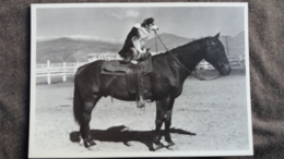 CPM CHEVAL HORSE CHIEN A CHEVAL  ED DU DESASTRE 2005 ANONYME HUMOUR - Chevaux