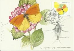 Cartes Maximum - Portugal - Cleopatra Butterfly - Gonepteryx Cleopatra - Mariposas