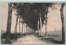 Meerhout : De Dreef (molen) - Meerhout