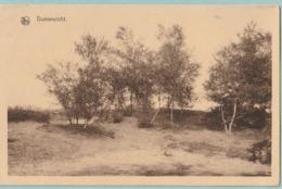 Calmpthout : Duinenzicht - Kalmthout