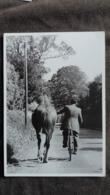 CPM CHEVAL HORSE IRLANDE 1962  2006 ED DU DESASTRE ERWITT - Chevaux