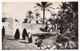 CHENINI - Rue à Travers Le Village - Tunisie