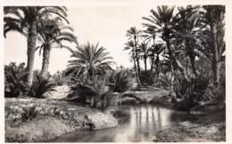 GABES - Chemini - Paysage Dans L'Oasis - Tunisie