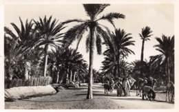 GABES - La Route De Sfax Dans L'Oasis - Tunisie