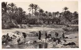 GABES - Laveuses Au Bord De L'Oued - Tunisie