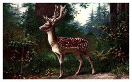 Fallow Deer - Other