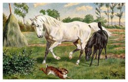 Horse , White Horse With Foal - Horses