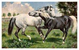 Horse ,  Horses In Field - Horses