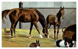 Horse ,  Hunter And Foal - Horses