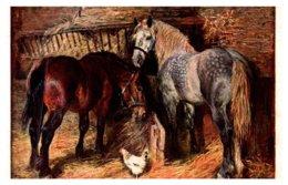 Horse ,  Horses Eating - Horses