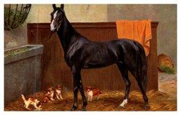 Horse  , Stallion - Horses