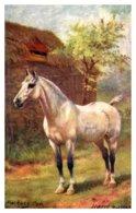 Horse ,    Hackney Cob - Horses