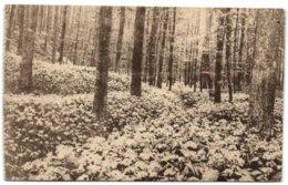 Ligue Des Amis De La Forêt De Soignes  - Vallon Des Ails - Auderghem - Oudergem