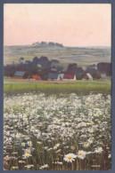 Blühende Wiese In Ländlicher Umgebung - Blumen