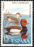 Espagne. Spain..1973. Nette Rousse;   Red-crested Pochard - Canards
