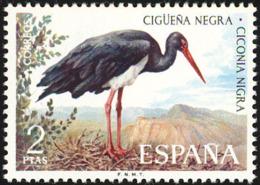 Espagne. Spain..1973.Cigogne Noire. Black Stork - Cigognes & échassiers