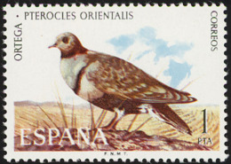 Espagne. Spain..1973.  Ganga Unibande.  Black-bellied Sandgrouse - Gallinacées & Faisans