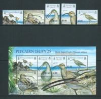 Pitcairn Islands 2005 Curlew Bird Set 5 & Miniature Sheet MNH - Stamps