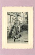 CALVI (corse) - Vieille Rue (photo Années 50, Format 10,7cm X 8cm) - Plaatsen