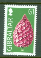 Gibraltar: 2004/06   Wild Flowers     SG1099   G1(12p)      MNH - Gibilterra