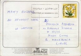 Tunisia Postcard Motive Animals Via Macedonia - Nice Machine Postmark And Stamp Motive Flowers - Tunisie (1956-...)