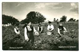 VARNA Photo Postcard Girls Picking ROSE Leaves ROSENERTE Im ROPSENTHAL Sent 1936 - Bulgaria