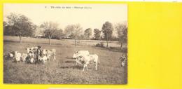 GEX Vaches Et Chèvres Au Pâturage Gessien () Ain (01) - Gex
