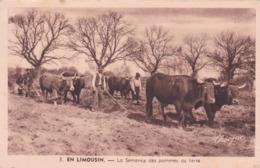 Cpa 3 EN LIMOUSIN LA SEMENCE DES POMMES DE TERRE  Carte Vierge - Limousin