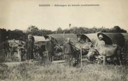 Indochina, SAIGON, Attelages De Bœufs Cochinchinois, Ox Carts (1899) Postcard - Viêt-Nam