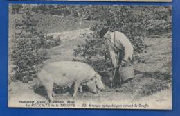 La Récolte De La Truffe      Animées - Landwirtschaft