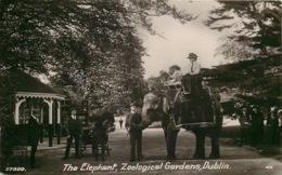 IRLANDE  DUBLIN  THE ELEPHANT  Zoological Gardens - Dublin