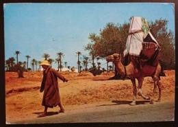 ILE DE DJERBA - La Johfa - Camel - TUNISIE -  Nice Stamp   Vg - Tunisia