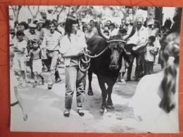 Photo Mouries 1982 .superbe Taureaux - Sports