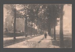 Meerhout - De School En Dreef - 1926 - Meerhout