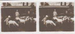 13 Plaques De Verre , C'etait Dans Le Papier Photographié  Ecrit LIBREVILLE - Plaques De Verre