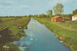 CHAMPAGNE-LES-MARAIS. - Le Canal Des Cinq Abbés. CPM - Frankrijk