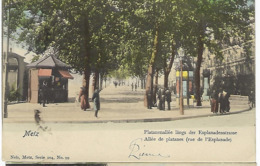 FRANCE - METZ - Platanenallée Längs Der Esplanadenstrasse - Allée De Platanes ( Rue De L'Esplanade) 1903 TRES TRES RARE - Metz