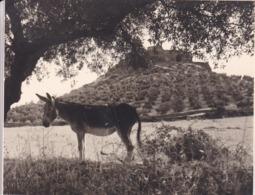 ALCONCHEL âne 1963 Photo Amateur Format Environ 5,5 Cm X 7,5 Cm - Lugares