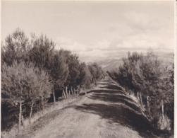 GRENADE GRANADA Chemin Conduisant Au LLANO De La PERDIZ 1963 Photo Amateur Format Environ 7,5 Cm X 5,5 Cm - Lugares