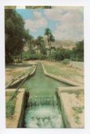Palestine: Cisjordanie, Jericho, Irrigation Channel From The Spring Of Elisha (19-1795) - Palästina