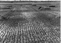 Photo Haute Volta (Burkina Faso) 1979. Vallée Du Kou Marécages Transformés En Rizières. Photo Du Père Gust Beeckmans - Africa