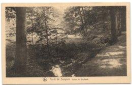 Forêt De Soignes - Vallon Du Vuylbeek - Auderghem - Oudergem