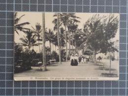 11.376) Africa Portuguesa Angola Mossamedes Grupo De Elegantes Passeando Na Avenida Ed. Mário Pizarro - Angola