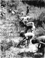 Photo Haute Volta (Burkina Faso) 1980. Les élèves Apprennent à Cultiver. Photo Du Père Gust Beeckmans - Africa