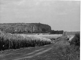 Photo Haute Volta (Burkina Faso) 1980. Les Plantations De Canne à Sucre à Banfora . Photo Du Père Gust Beeckmans - Africa