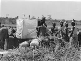 Photo Haute Volta (Burkina Faso) 1980. Rizicultures Dans La Vallée Du Kou . Photo Du Père Gust Beeckmans - Africa