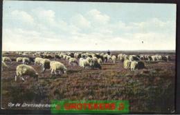 DRENTHE. (1911) Schaapskudde Op De Heide Afstempeling Veenhuizen 1913 - Pays-Bas