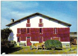 Carte Postale 64. Espelette Séchage De Piments à La Ferme Trés Beau Plan - France